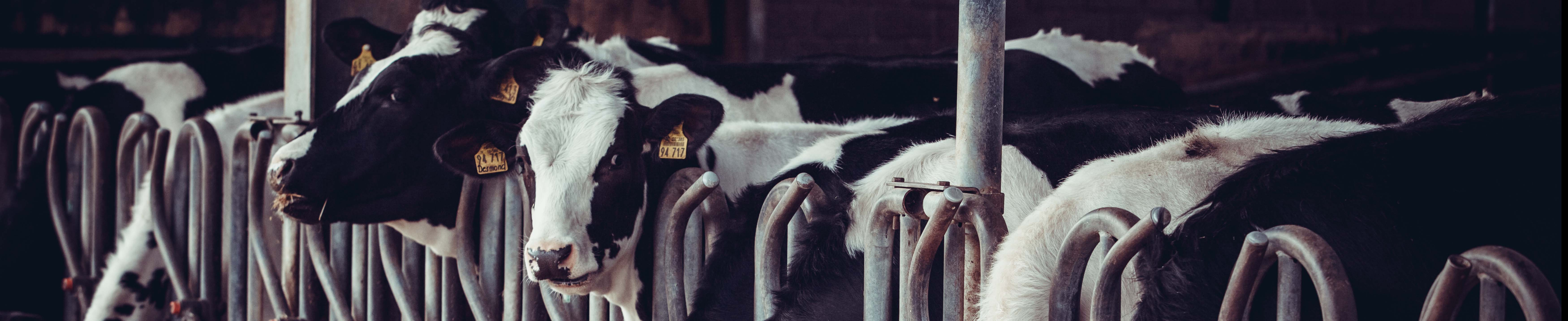 Dairies use Chillers from BV Thermal Systems